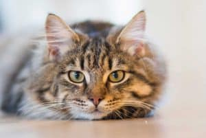 Do cats really need to be groomed? Guide to Grooming