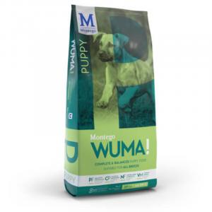 Montego - Wuma - Puppy