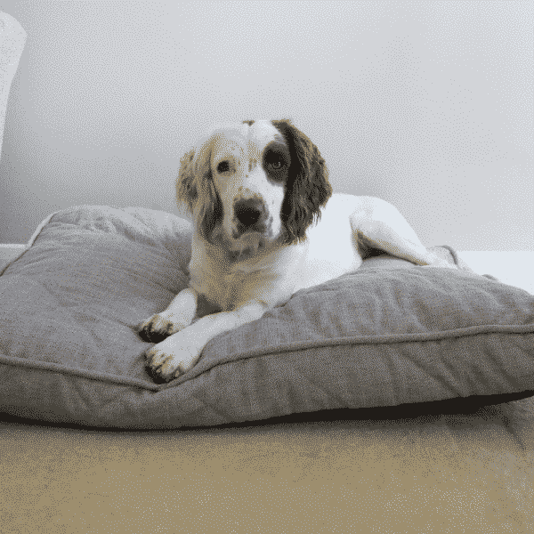 Rosewood Grey tweed dog bed with dog
