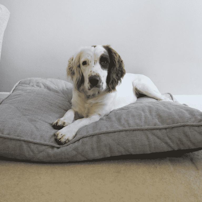 Rosewood Grey tweed dog bed with dog