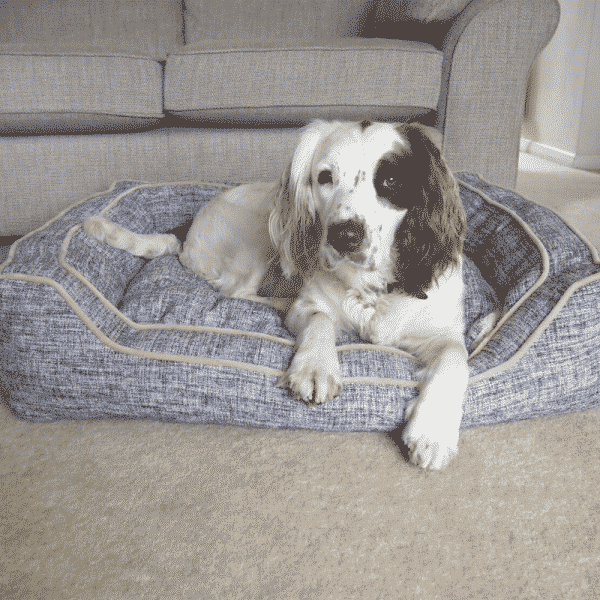 Rosewood Luxury Slate & Oatmeal Square Bed with dog