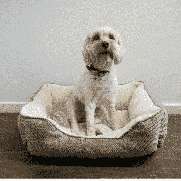 Rosewood Luxury Truffle Square Bed with dog 1
