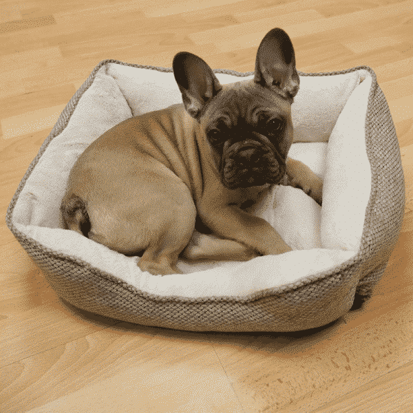 Rosewood Luxury Truffle Square Bed with dog 3