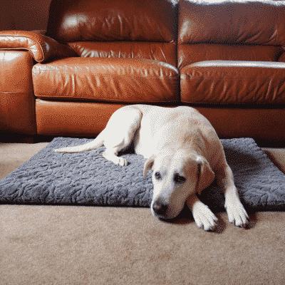 Rosewood Orthopaedic Bone Plush Mattress with dog