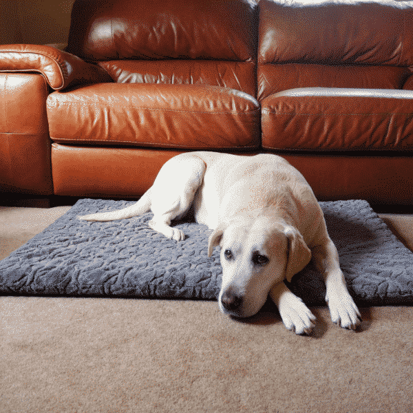 Rosewood Orthopaedic Bone Plush Mattress with dog