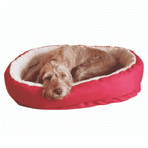 Rosewood Red Orthopaedic with dog
