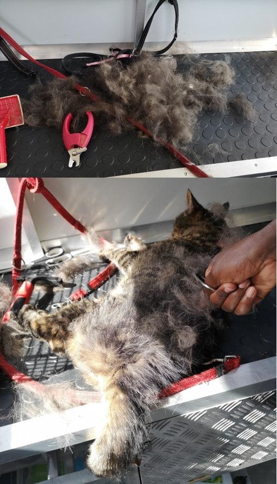 cat being groom