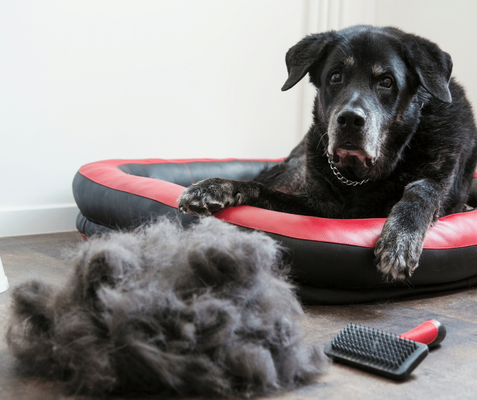 How to manage pet hair and shedding