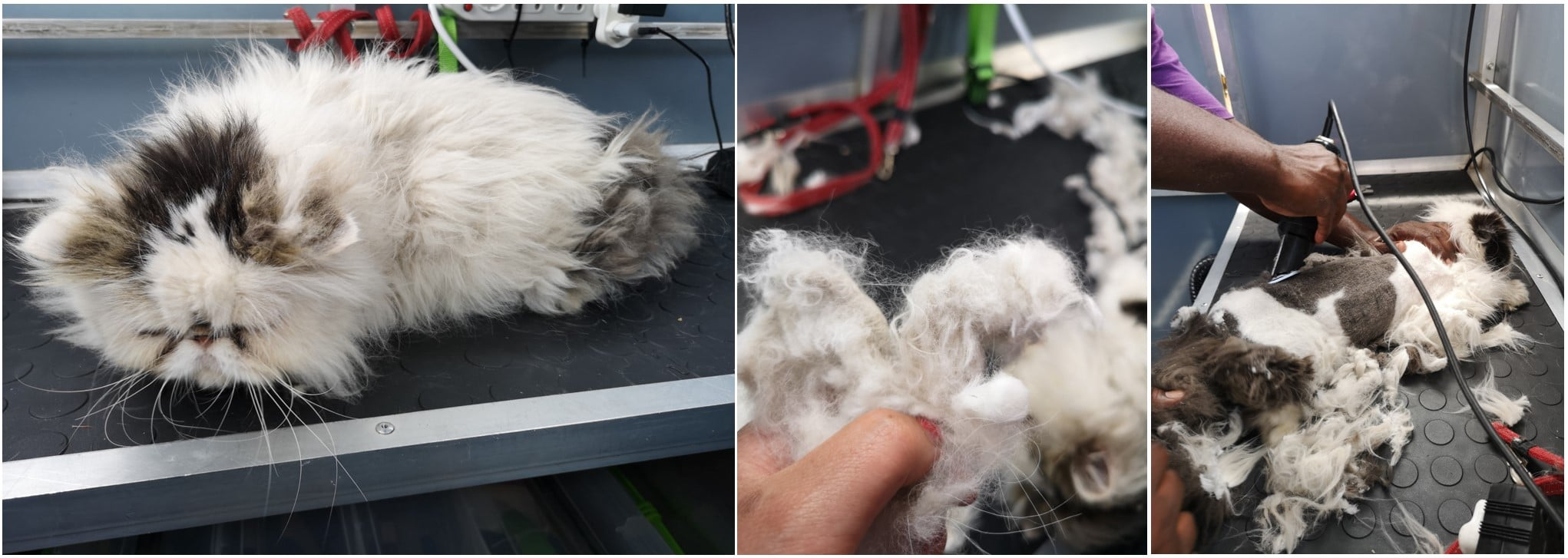 Matted cat being shaved