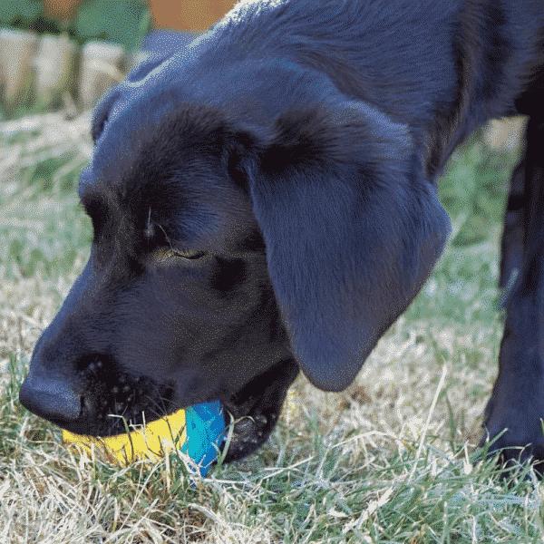 Chillax Cool Soak Ball dog chewing