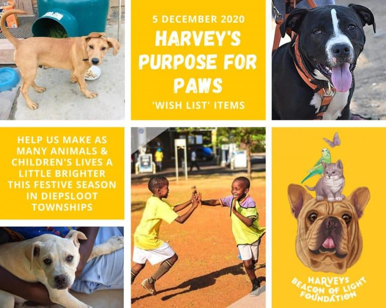 Harveys beacon of light initiative