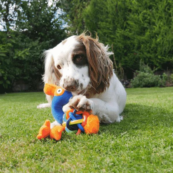 Jolly Doggy Play-Plus Flamingo dog playing