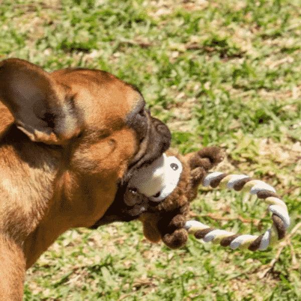 Kong Tugger Knots Moose dog pulling
