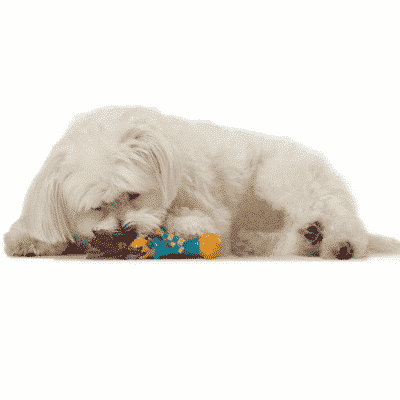 Petstages® Mini Dental Chew Pack