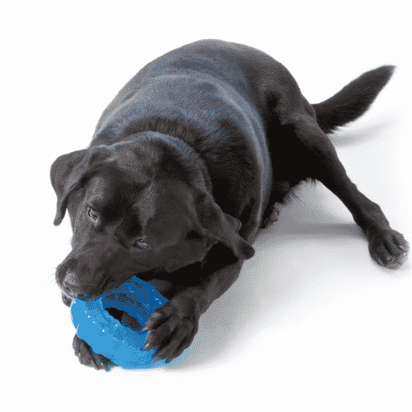 Petstages® ORKA Tyre dog chewing