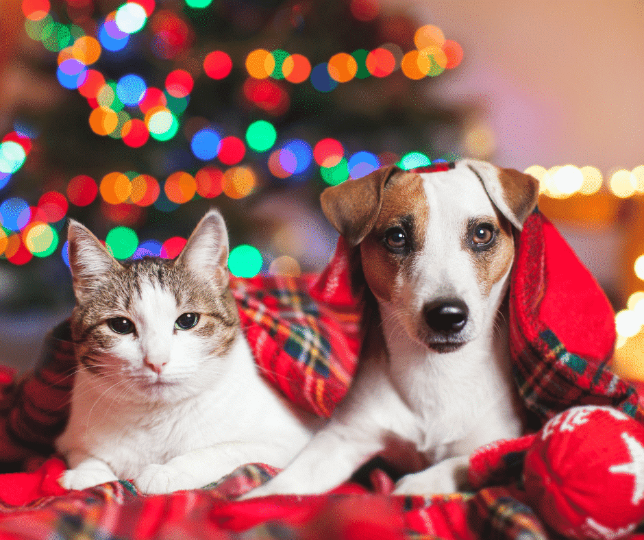 Christmas gift ideas for your pets