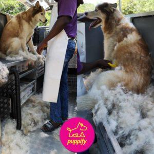 dog grooming and deshedding