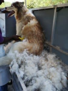 husky deshedding grooming brush out