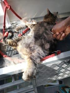 Cat deshedding