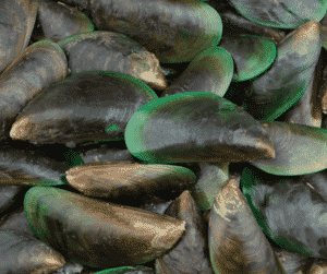 Green Lipped Mussel: Benefits for Your Dog